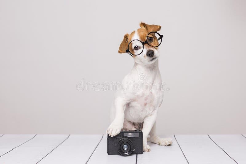 Pequeño perro lindo que se sienta en el piso blanco y los vidrios que llevan El parecer inteligente y curioso Cámara del vintage  fotografía de archivo