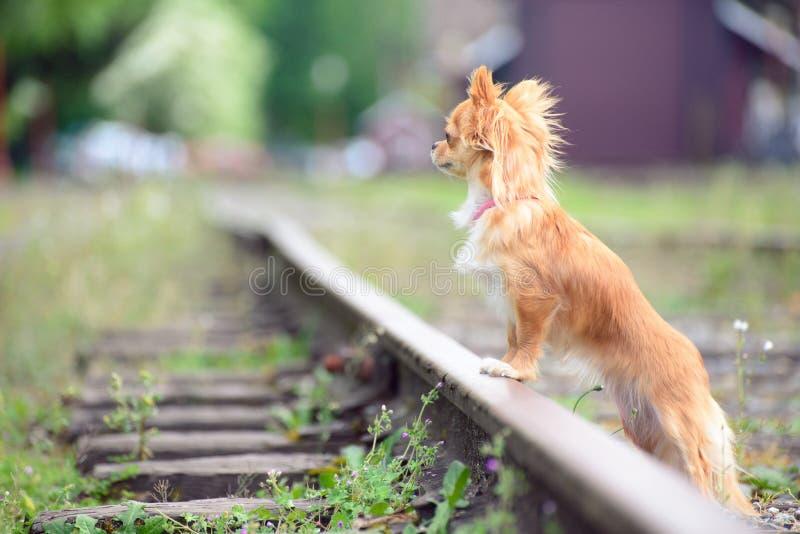 Pequeño perro pelirrojo triste que espera en el ferrocarril fotos de archivo