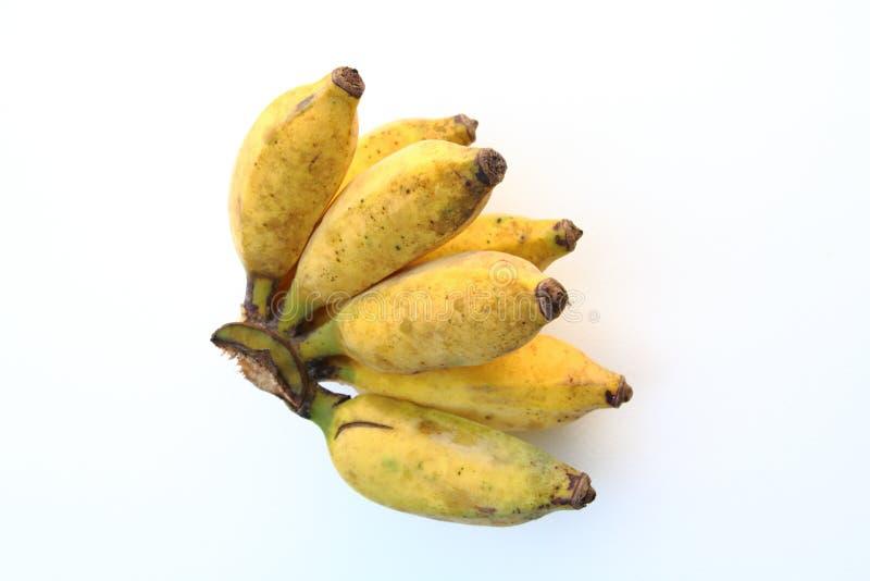 Pequeño plátano en BG blanca fotos de archivo libres de regalías