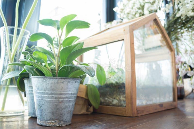 Pequeño pote de la planta exhibido al lado de la ventana imágenes de archivo libres de regalías