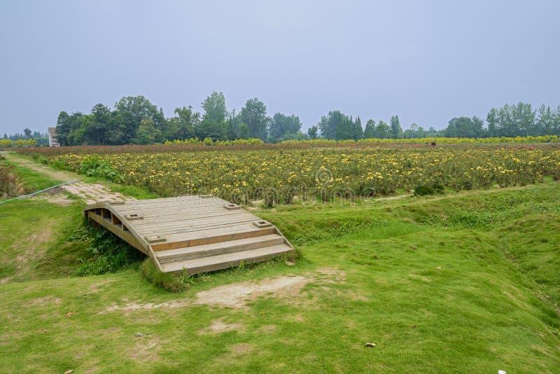 Pequeño puente de madera cerca de tierras de labrantío de la flor imagen de archivo libre de regalías