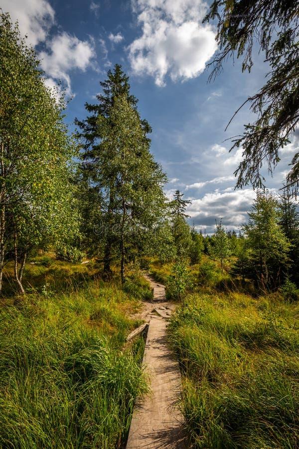 Pequeño puente de madera sobre pequeña corriente en el bosque en el top de montañas de la tabla imágenes de archivo libres de regalías