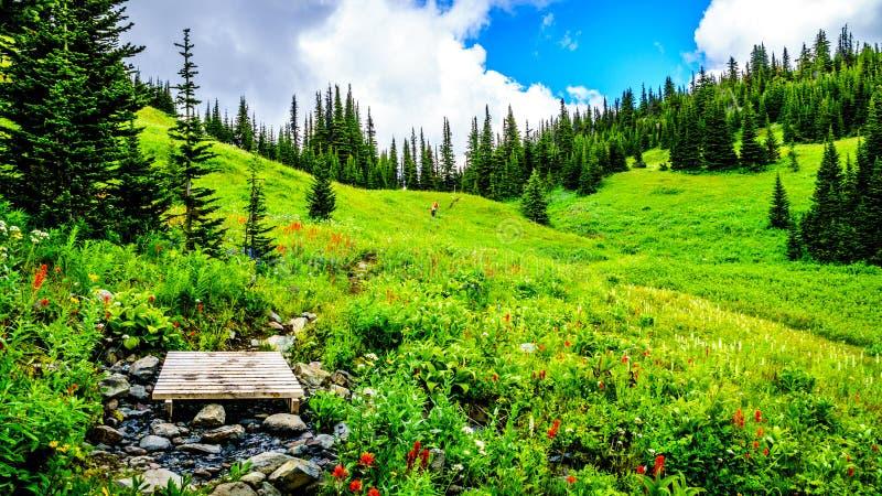Pequeño puente sobre una cala en un alza a través de prados alpinos por completo de Wildflowers coloridos a Tod Mountain fotos de archivo libres de regalías