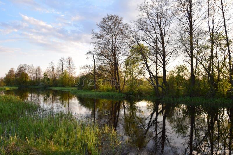 Pequeño río fotografía de archivo libre de regalías