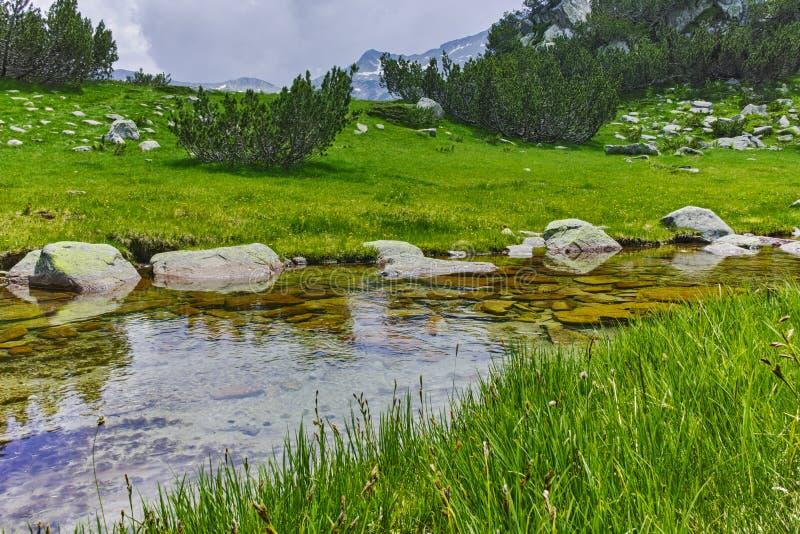 Pequeño río e hierba verde, montaña de Pirin fotografía de archivo