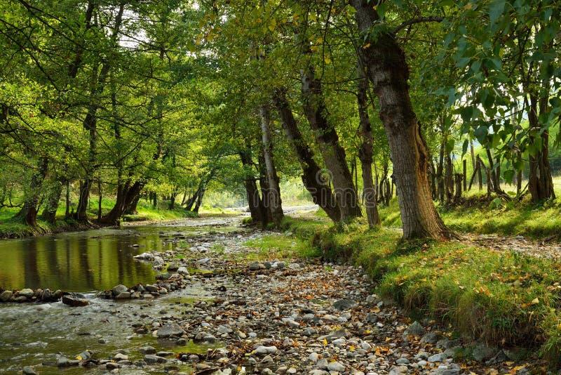 Pequeño río en campo imagen de archivo