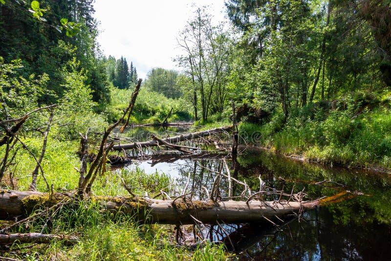 Pequeño río en la región Varmland, paisaje pacífico de Suecia fotos de archivo