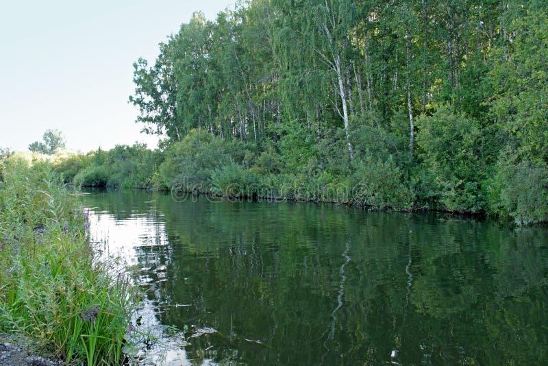 Pequeño río en Siberia foto de archivo