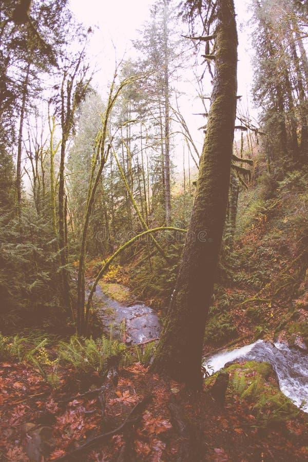 Pequeño río que corre en un bosque foto de archivo