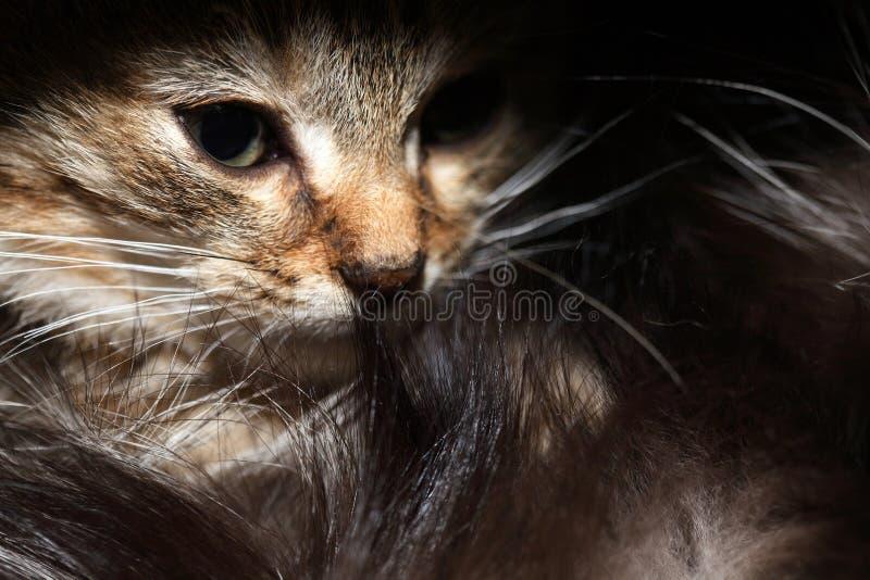 Pequeño retrato del gato fotos de archivo libres de regalías