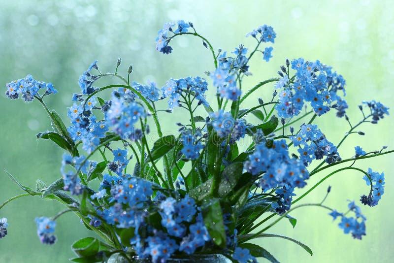 Pequeño rocío azul de las flores salvajes imagenes de archivo