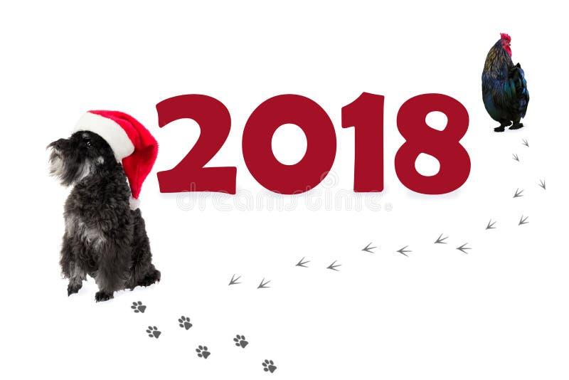 Pequeño Schnauzer miniatura del perro negro en sombrero del ` s de Papá Noel como símbolo foto de archivo libre de regalías