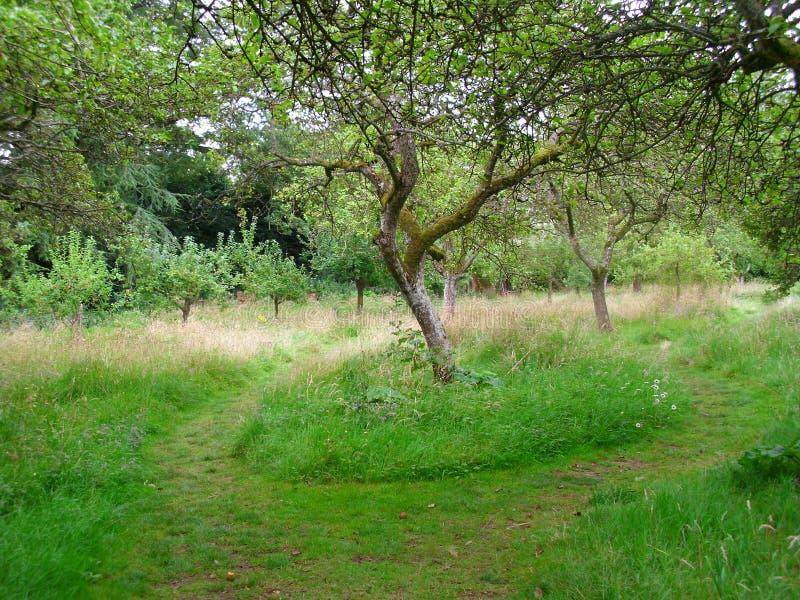 Pequeño sendero a través de un prado en verano, árboles frutales viejos, fotos de archivo libres de regalías