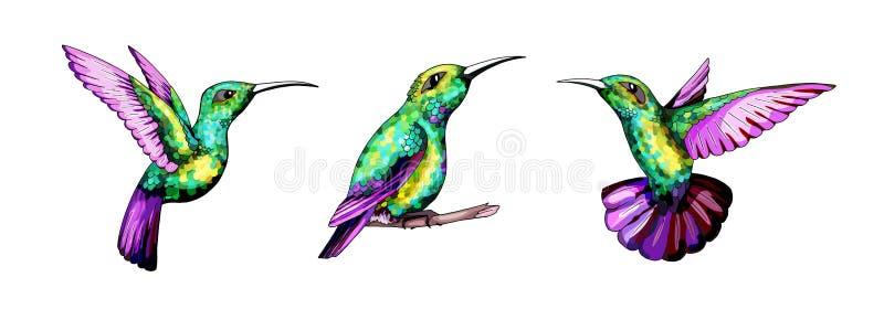Pequeño sistema del colibrí Pájaro tropical exótico del colibri Plumas esmeralda de oro stock de ilustración