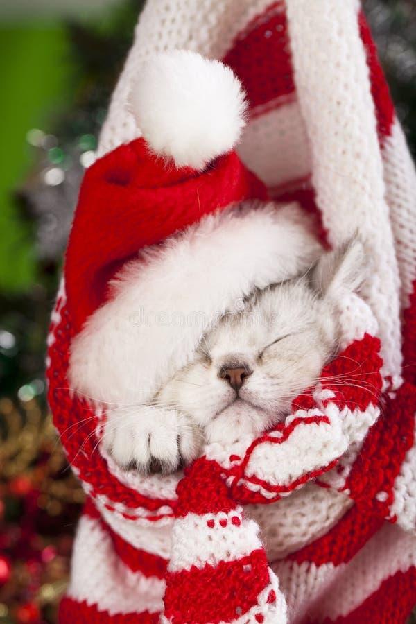 Pequeño sueño del gatito imagen de archivo