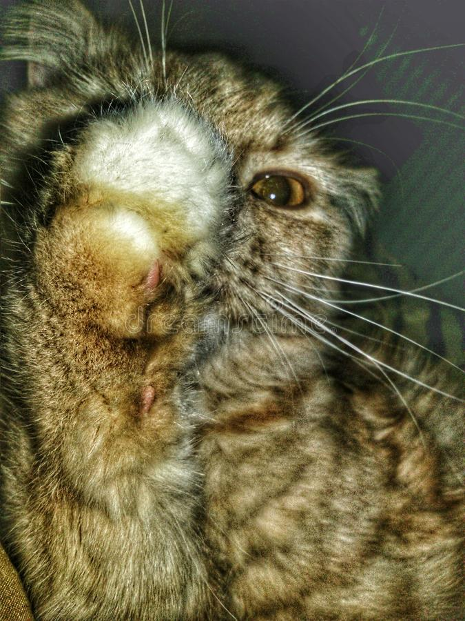 Pequeño tigre fotografía de archivo libre de regalías