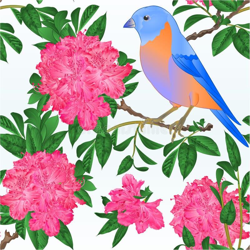 Pequeño tordo del azulejo del pájaro de la textura inconsútil y ejemplo del vector del vintage del fondo de la primavera del pink libre illustration