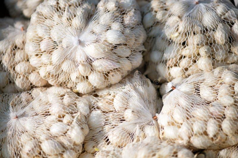 Pequeños bolsos netos plásticos llenos de semilla de la cebolla blanca fotos de archivo
