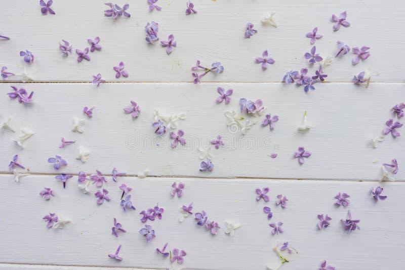 Pequeños brotes de la lila en los tableros de madera blanco-pintados stock de ilustración