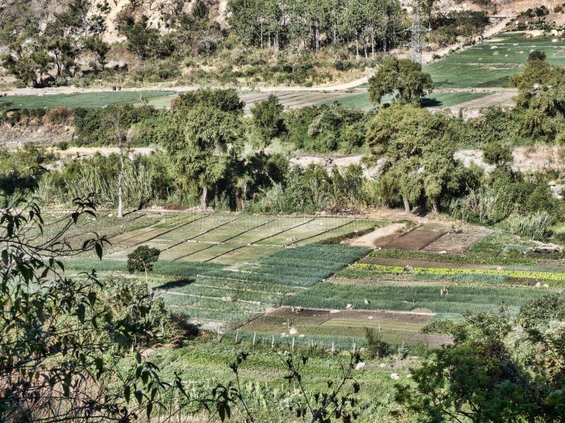 Pequeños campos de granjeros en el sudoeste Guatemala fotografía de archivo libre de regalías