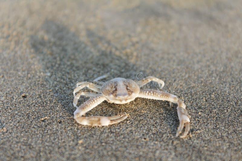 pequeños cangrejos en el mar fotografía de archivo