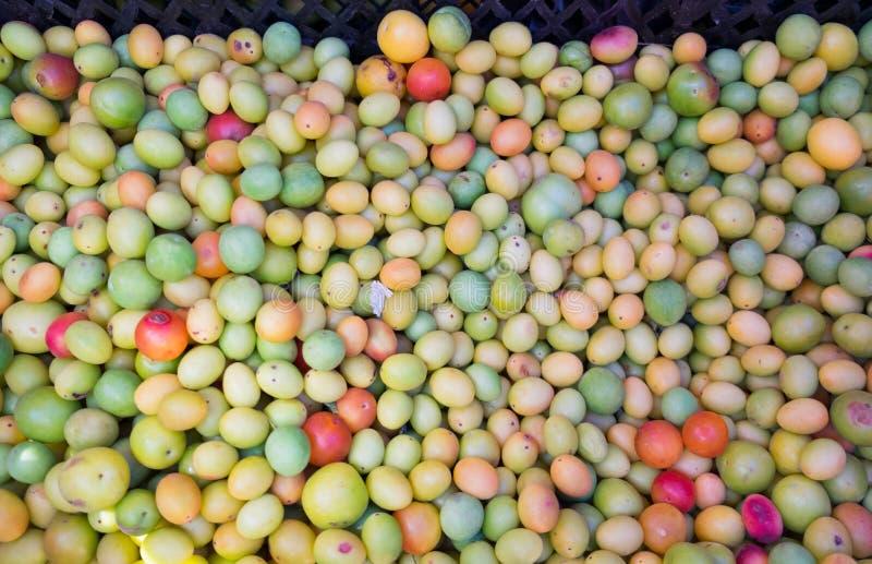 Pequeños ciruelos tkemaly para la venta en el mercado de los granjeros imagen de archivo libre de regalías