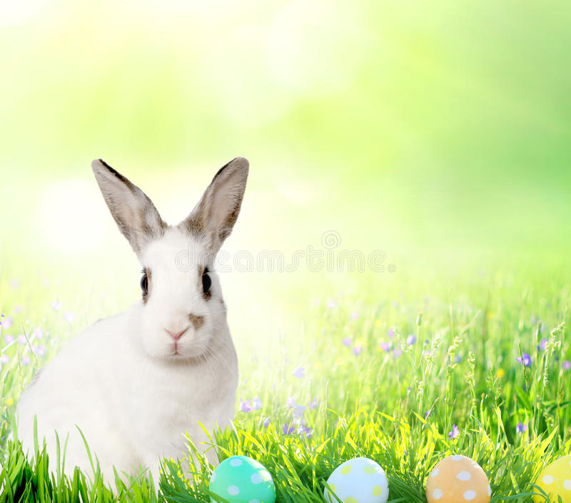 Pequeños conejito y huevos de Pascua lindos en GR verde fotos de archivo libres de regalías