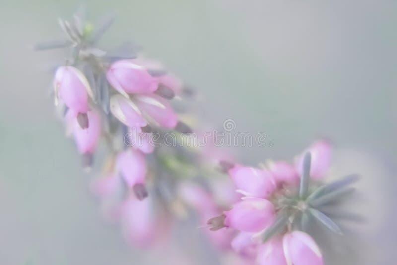 Pequeños floretes rosados en un fondo indistinto verde imagenes de archivo
