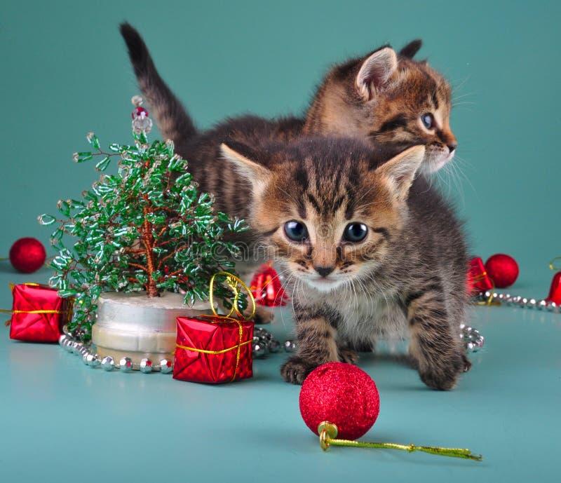 Pequeños gatitos divertidos con el árbol de navidad y las bolas hechos a mano fotos de archivo libres de regalías