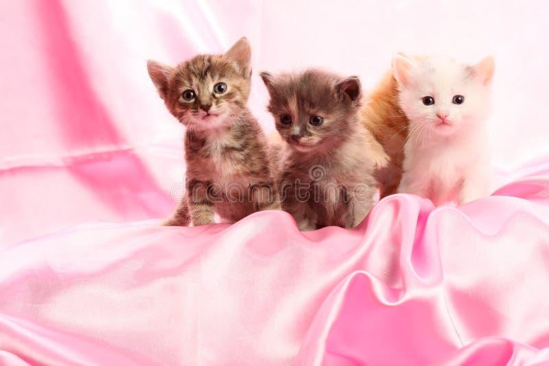 Pequeños gatitos en color de rosa fotos de archivo