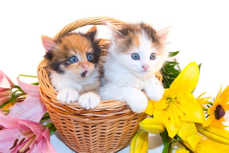 Pequeños gatitos en una cesta y flores fotos de archivo