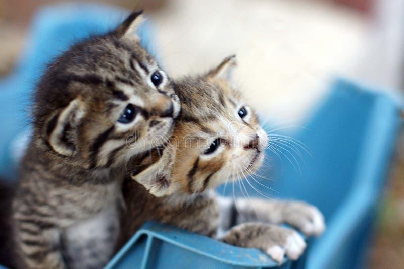 Pequeños gatitos griegos en la isla de Zakynthos imagen de archivo libre de regalías