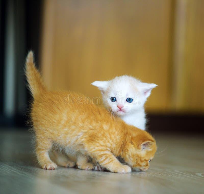 Pequeños gatitos lindos foto de archivo
