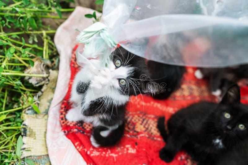 Pequeños gatitos que juegan en una hierba imagen de archivo