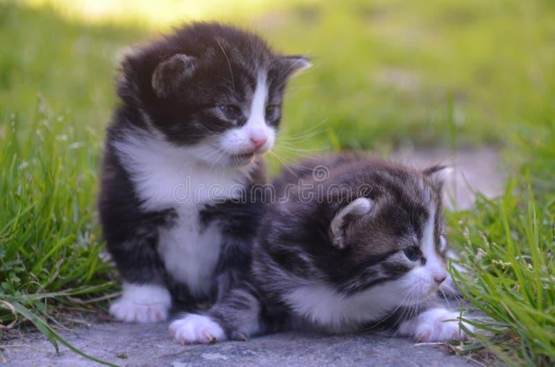 Pequeños gatitos que se sientan en césped imagen de archivo libre de regalías
