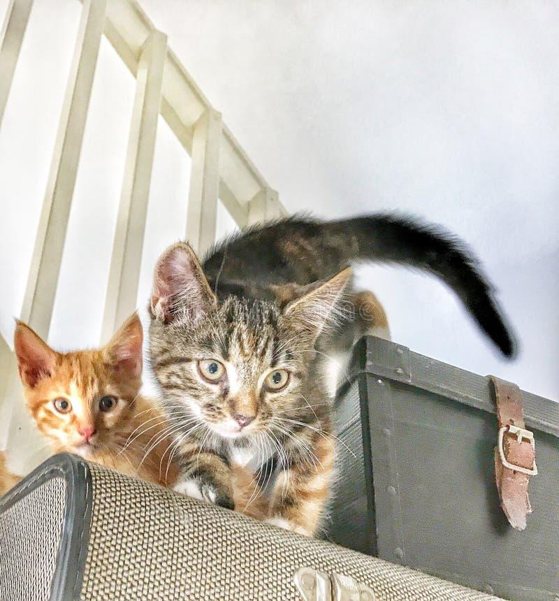 Pequeños gatitos rojos y grises altos sobre las escaleras fotografía de archivo