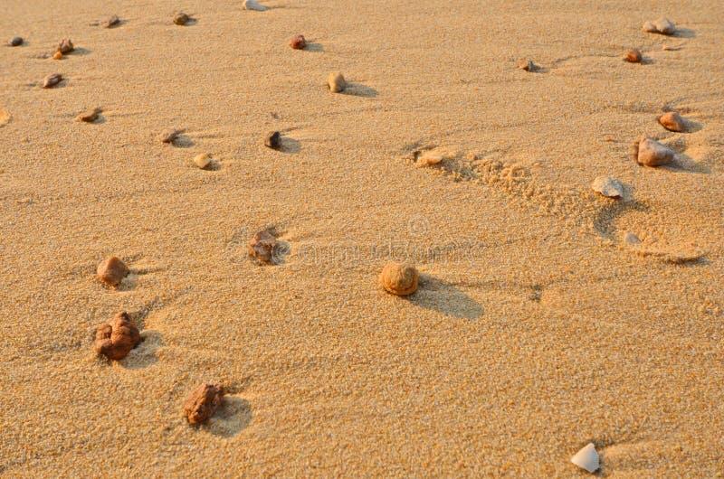 Pequeños guijarros en la luz del sol en la arena fotografía de archivo