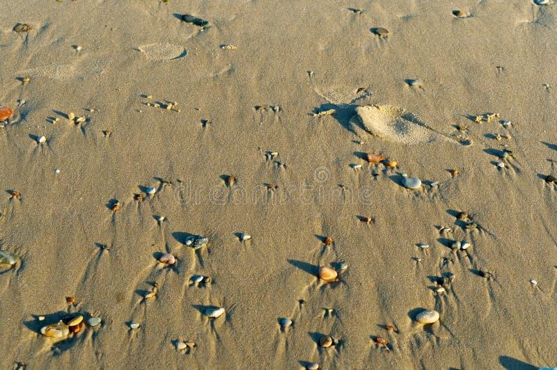 Pequeños guijarros raros en la arena, pequeñas piedras en la playa en la arena fotografía de archivo