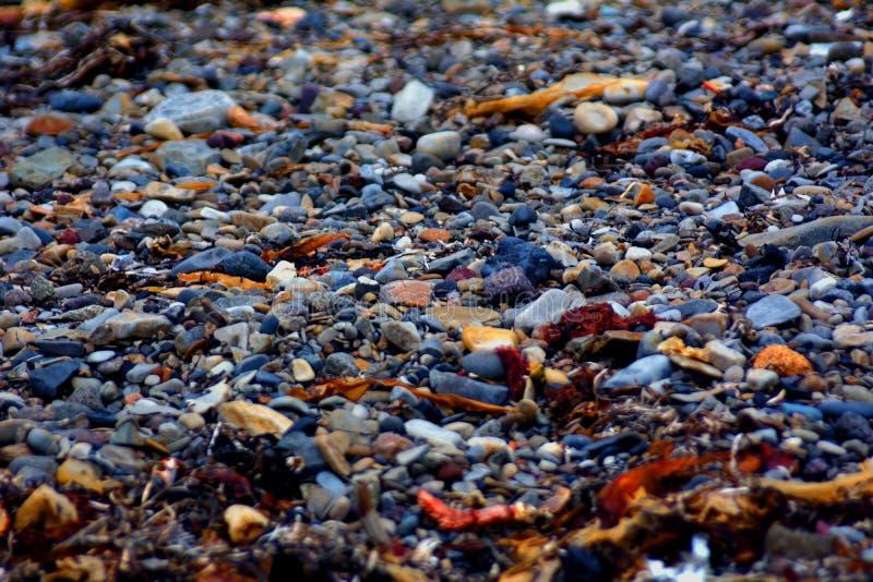 pequeños guijarros y alga marina en la costa imágenes de archivo libres de regalías