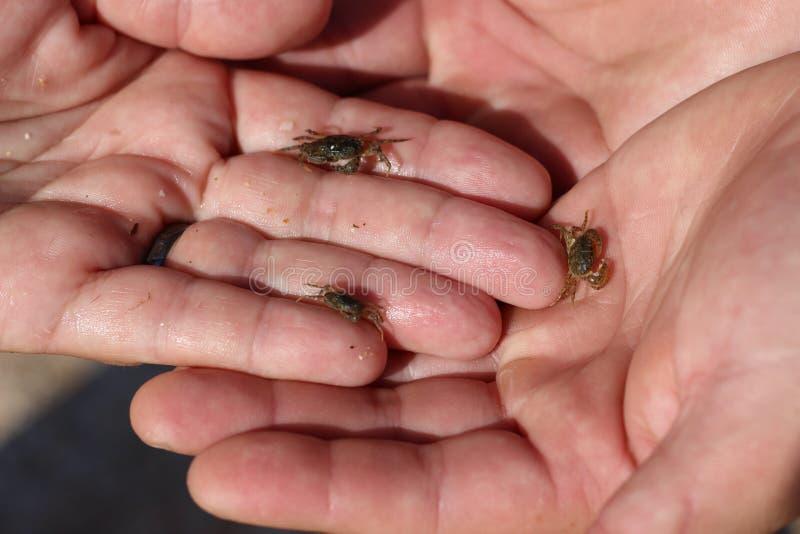 Pequeños habitantes del mar Un cangrejo del bebé fotografía de archivo libre de regalías