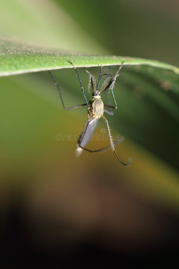 Pequeños insectos en el jardín fotografía de archivo libre de regalías