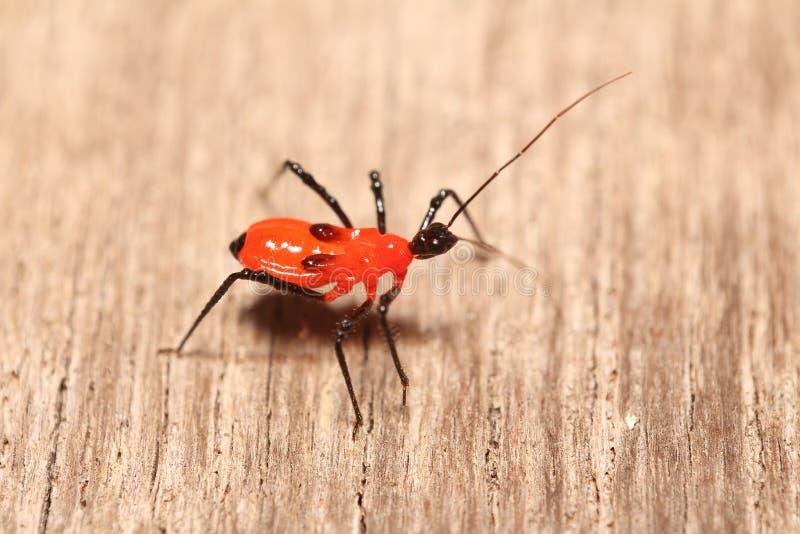Pequeños insectos en el jardín imagen de archivo libre de regalías