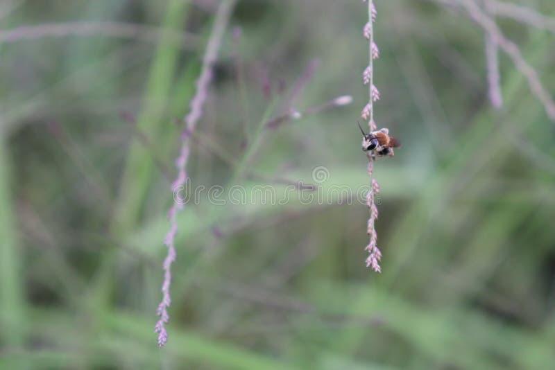 Pequeños insectos que se encaraman en malas hierbas, imagen de archivo libre de regalías