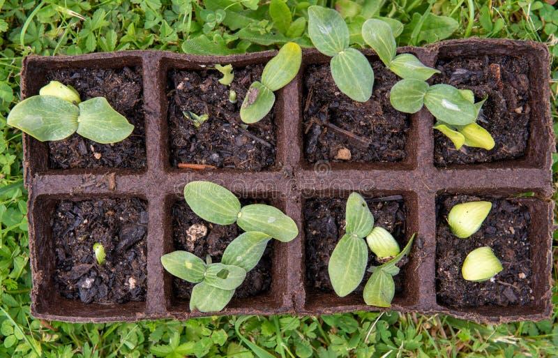 Pequeños lanzamientos de la planta para el jardín imágenes de archivo libres de regalías
