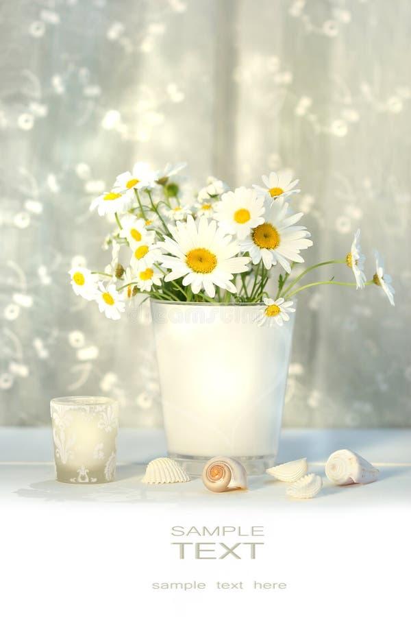 Pequeños margaritas blancas y seashells fotografía de archivo libre de regalías