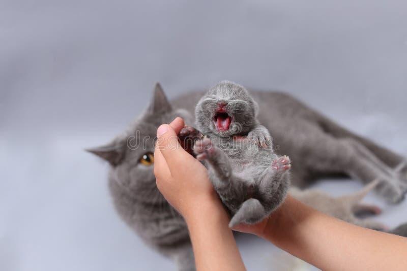 Pequeños maullidos del gatito en manos del niño foto de archivo libre de regalías