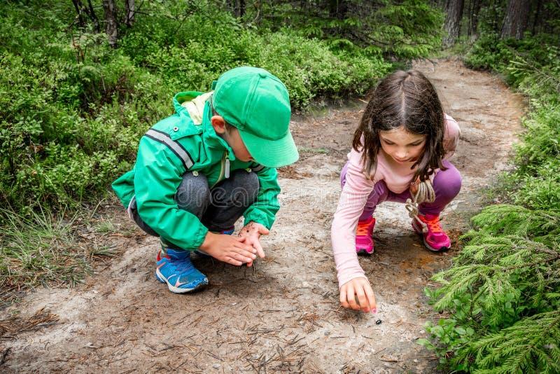 Pequeños niños muchacho y muchacha que se sientan en la tierra del bosque que explora y que aprende sobre la naturaleza e insecto foto de archivo