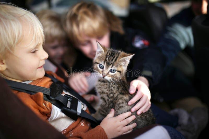 Pequeños niños que se sientan en el coche que acaricia el nuevo gatito del bebé imagen de archivo libre de regalías