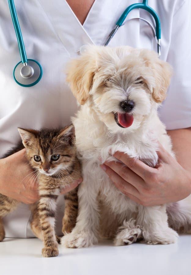 Pequeños perro y gato en el veterinario fotografía de archivo libre de regalías