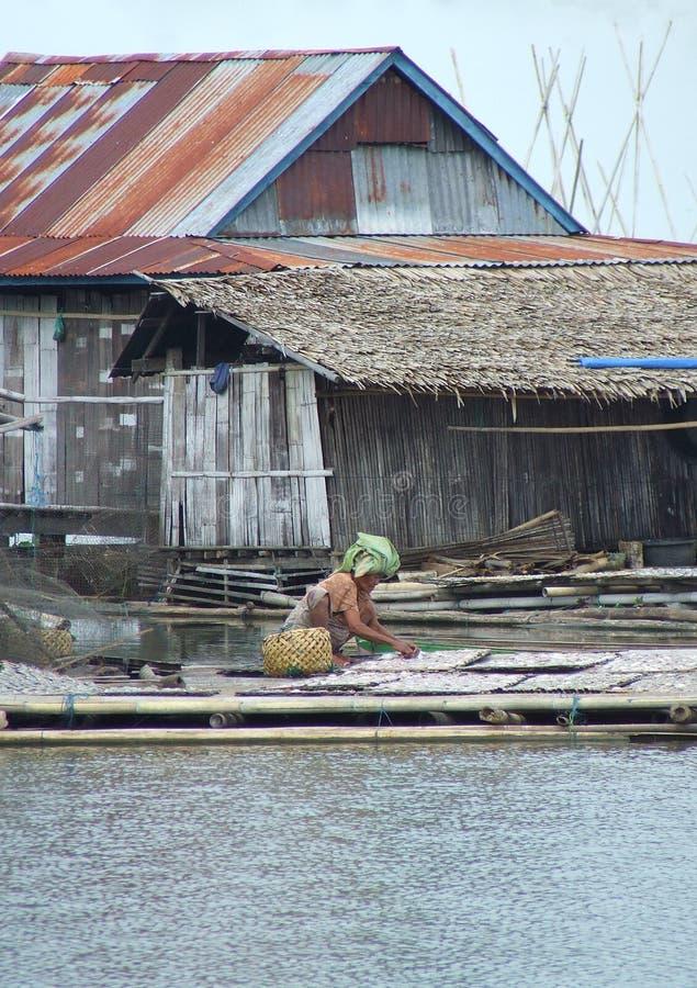 Pequeños pescados de sequía en el lago Tempe en Sulawesi fotos de archivo